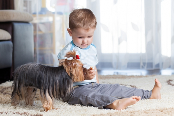Raising Pets With Children